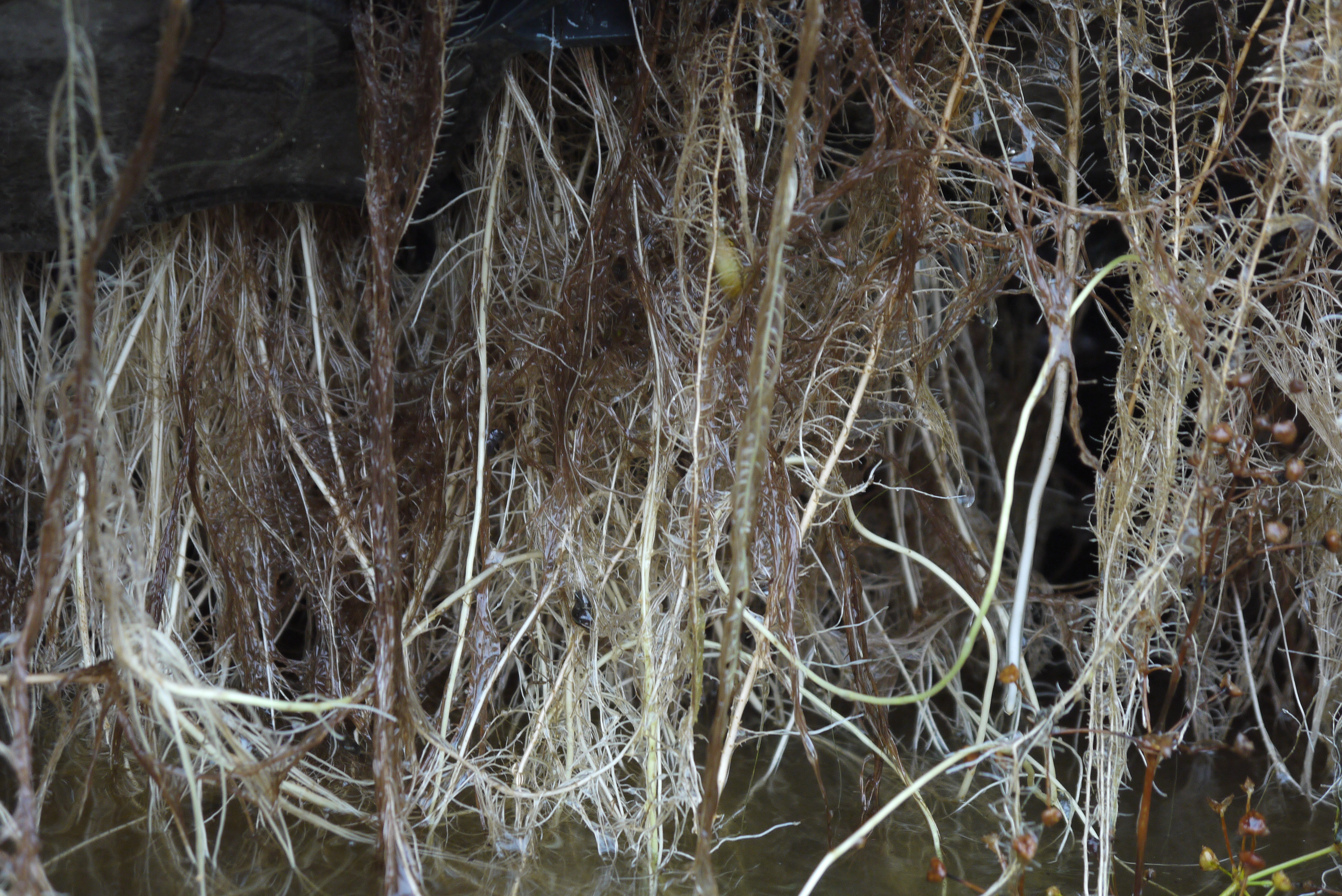 BioHaven Floating Island roots