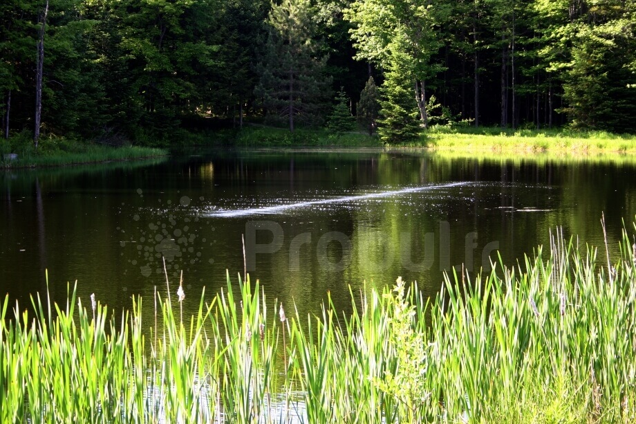 Pond and Lake Aeration