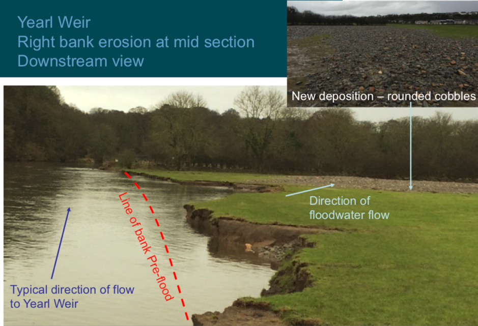Bank erosion of the downstream reach with new channel line